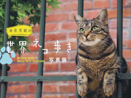 岩合さんのネコ写真展もあるよ!猫の魅力を発信する「せいせき ねこフェス」3/26より開始