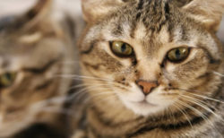色の変化でわかる!自宅で簡単に猫の尿を検査できる「おうちでおしっこチェックキット」
