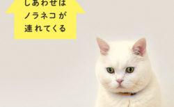 韓国でいちばん有名な猫、ヒックのフォトエッセイ『しあわせはノラネコが連れてくる 』