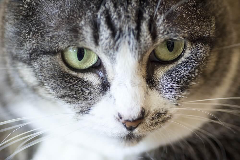 ネコのアップ写真