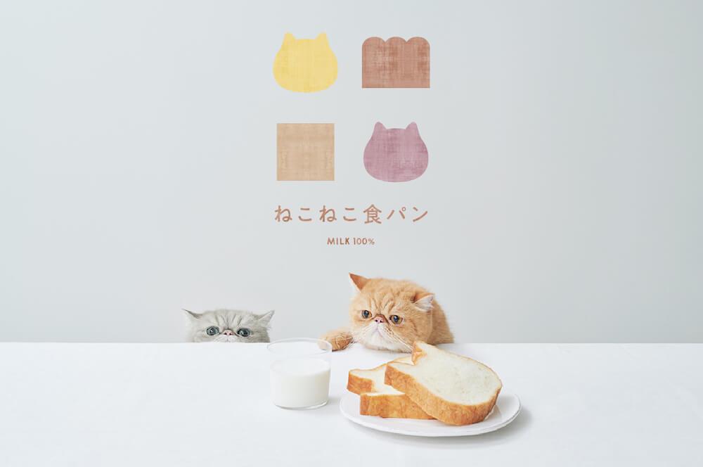 高級食パンの「ねこねこ食パン」メインビジュアル