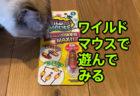 ワイルドマウス(クレイジーマウス)で猫と遊んでみたら警戒しすぎて可愛い猫動画【猫おもちゃレビュー】