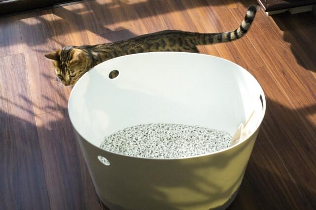 トイレに入ろうとうかがっている猫のイメージ写真