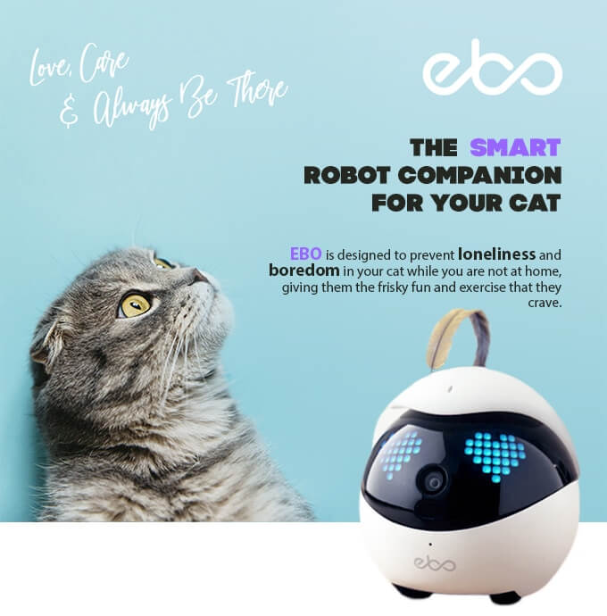 猫を見守ったり猫と一緒に遊んでくれるスマートロボット「Ebo(イーボ)」メインビジュアル