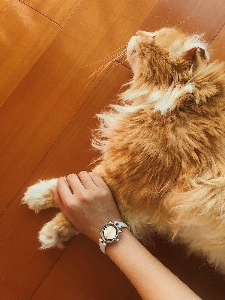 猫型スケルトン腕時計(ESL081)を装着して猫の手を握ったイメージ