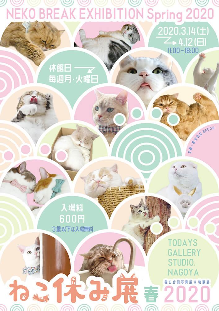 猫の合同写真展&物販展「ねこ休み展 春 2020」メインビジュアル