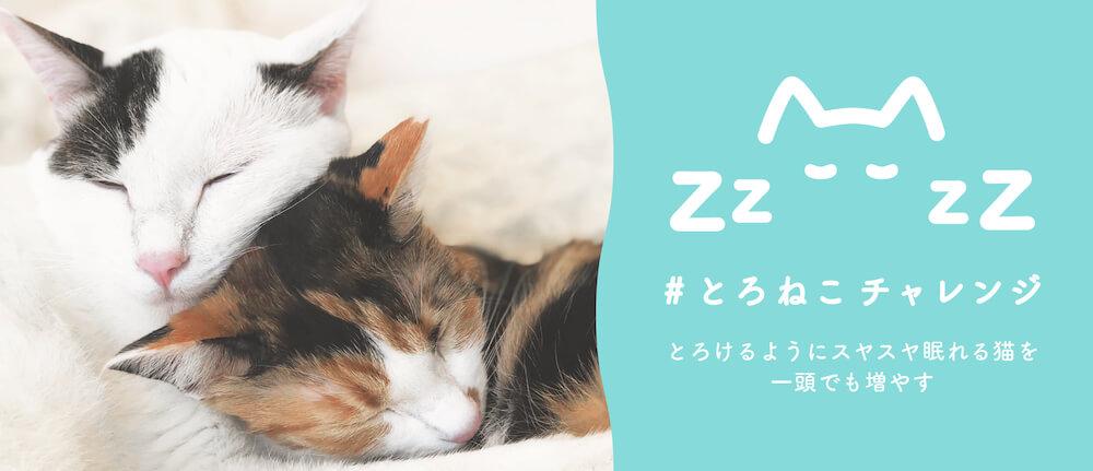 猫の命を救うプロジェクト「#とろねこチャレンジ」のメインビジュアル