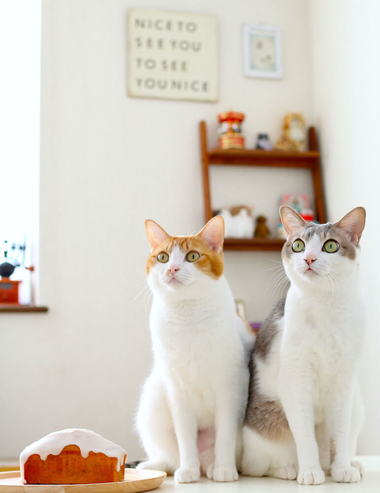 同じ方向を向く双子猫のアメカヌちゃん(アメリとカヌレ) by Riepoyonn