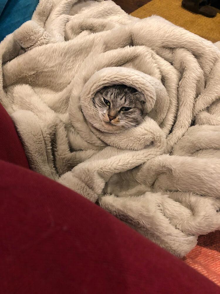 毛布から顔だけを出す猫 by ココニャ