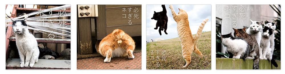 必死すぎるネコのタオルハンカチ by 沖昌之