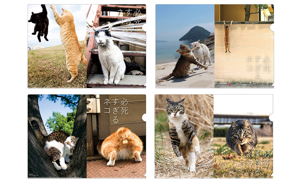 必死すぎるネコのクリアファイル by 沖昌之