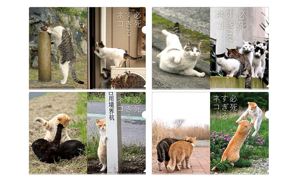 必死すぎるネコのクリアファイルセット by 沖昌之