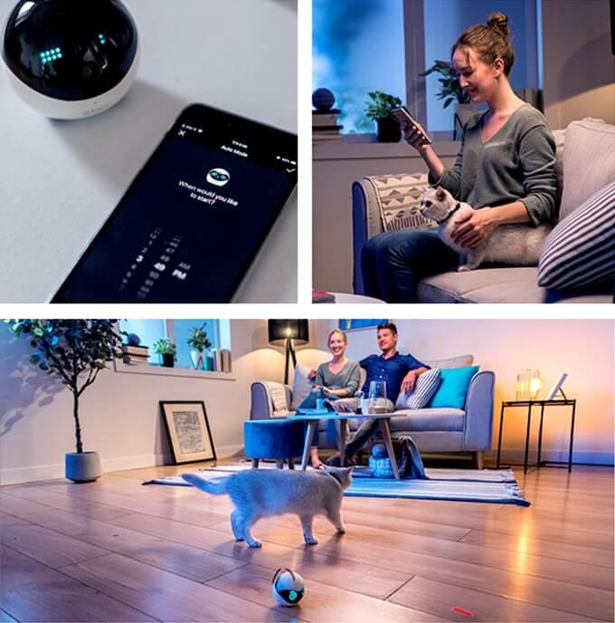 猫用スマートロボット「Ebo(イーボ)」の使用イメージ