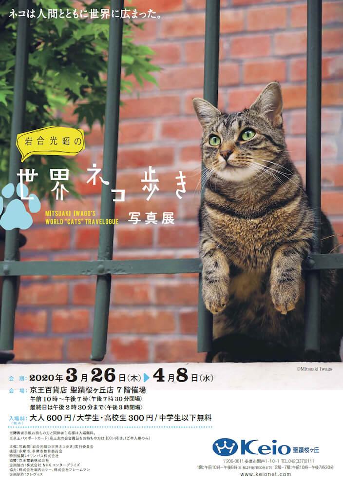 「岩合光昭の世界ネコ歩き写真展」@せいせき ねこフェス