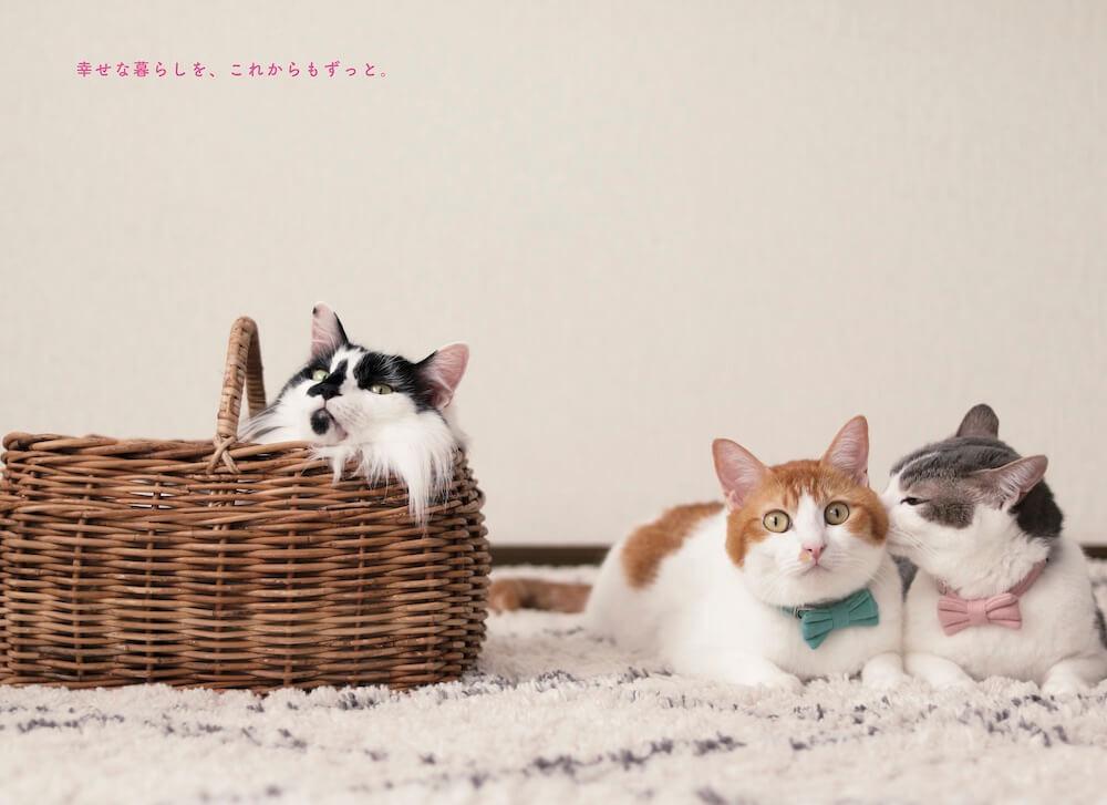 Riepoyonnこと、たむらりえさんの愛猫、アメカヌちゃん(アメリちゃん&カヌレくん)と兄猫そらくん