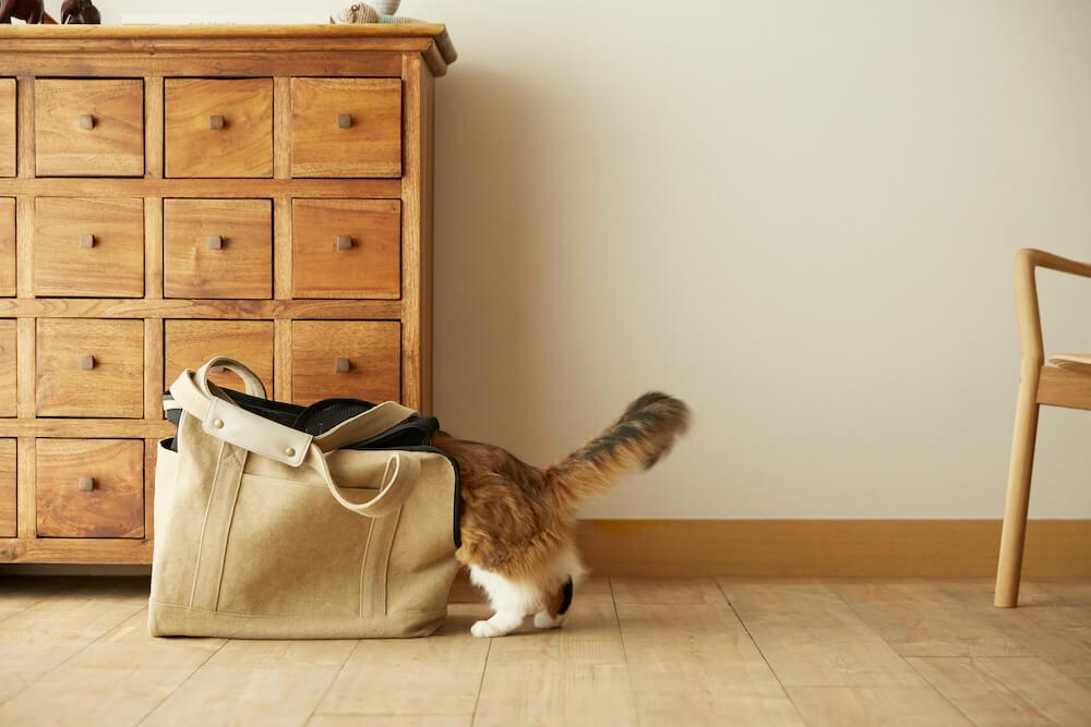 Neko Carry Bag(ネコキャリーバッグ)に潜り込もうとする猫