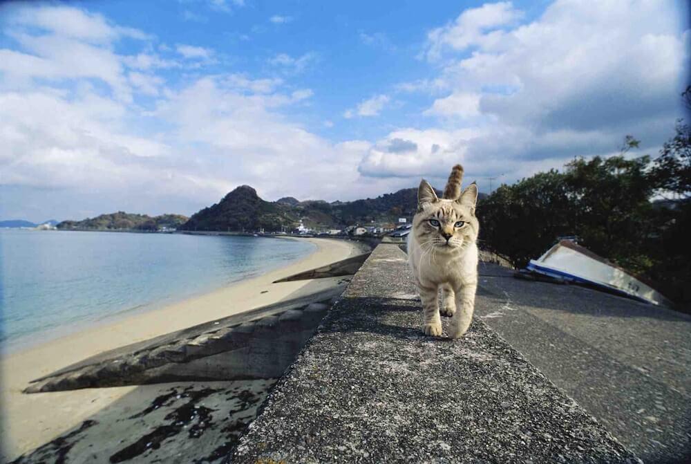 海岸線を歩く猫の正面写真(愛媛県松山市) by 岩合光昭