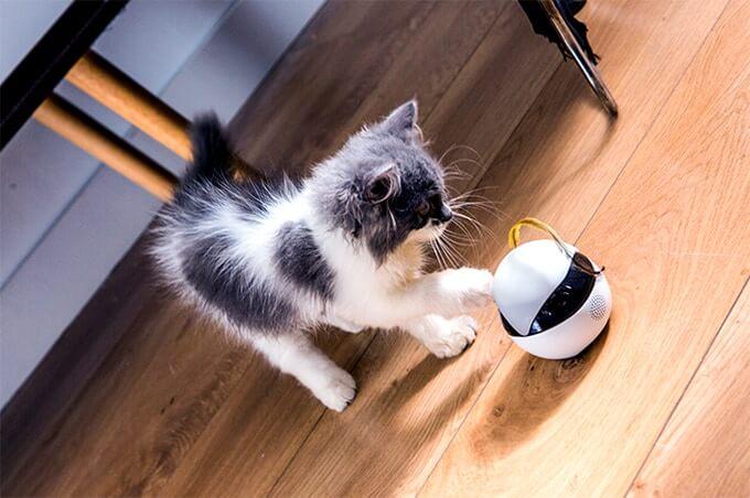 猫用スマートロボット「Ebo(イーボ)」で遊ぶ猫の様子