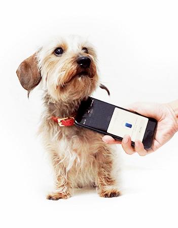 NFCタグ内臓のペット迷子札「PawBell(パウベル)」にスマホをかざして情報を読み取るイメージ