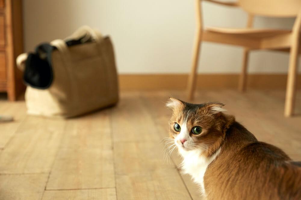 Neko Carry Bag(ネコキャリーバッグ)を背に振り返る猫