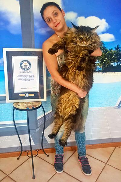 ギネス世界記録に認定されている、存命中の最も長い飼い猫「バリベル」
