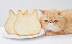 ネコ型食パンで小倉トーストを楽しめる♪「ねこねこ食パン」で3/20から人気セットが復活