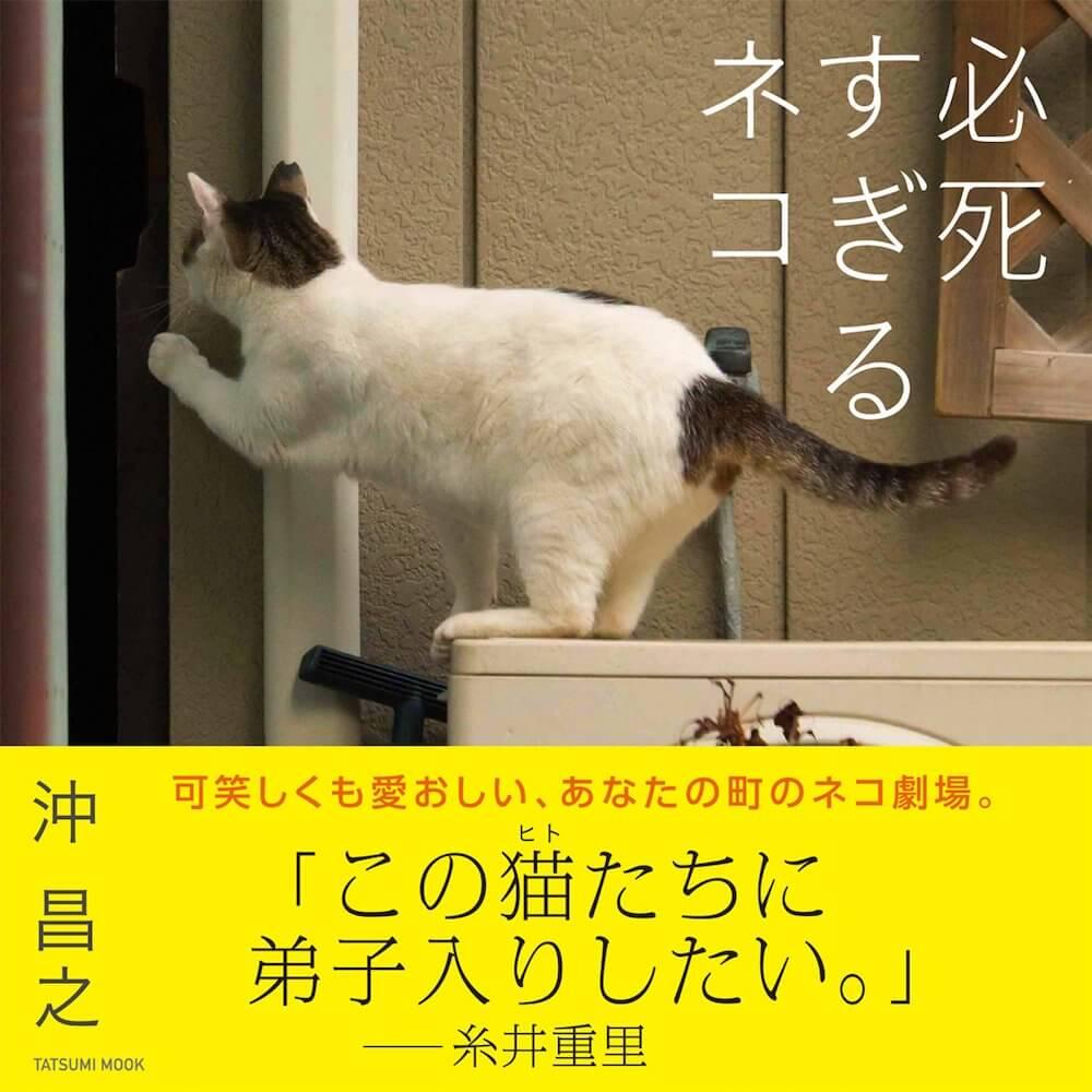 猫写真家・沖昌之さんの写真集「必死すぎるネコ」の表紙