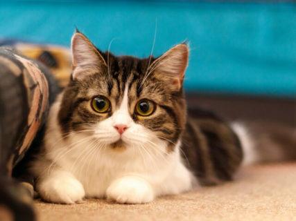 猫の飼育費用は年間いくら!?2019年版データの支出額1位はフード、前年比1位は防災用品