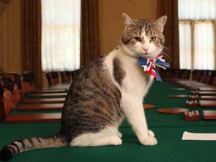 世界中のノートPCの半分は猫に占拠されている!?イギリスの首相官邸ネコが情報提供を呼びかけ