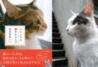 すべての愛猫家へ贈る感動の一冊、作家・村山早紀さんの新刊「心にいつも猫をかかえて」