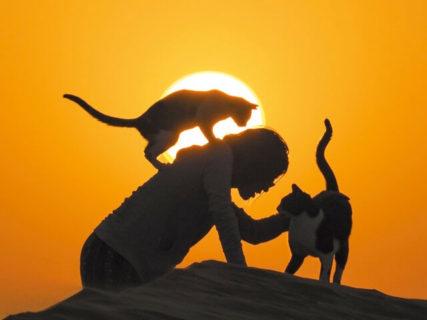 猫に寄り添う人の気持は世界共通ニャ!岩合光昭氏の新しい写真集「スタンド・バイ・ニャー」