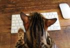 フットサルクラブが異例の取り組み!猫についてZoomで語り合う「湘ニャンベルマーレ集会」