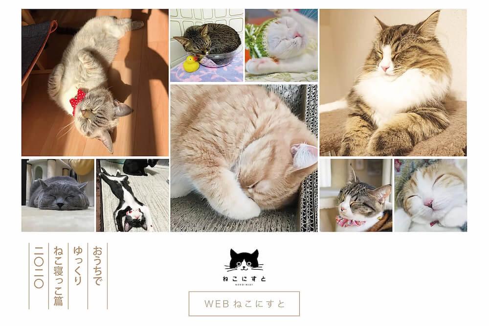 猫のオンライン写真展「WEBねこにすと〜ねこ寝っこ篇〜」メインビジュアル