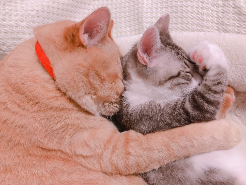 猫を抱きしめて眠る猫 by WEBねこにすと〜ねこ寝っこ篇〜