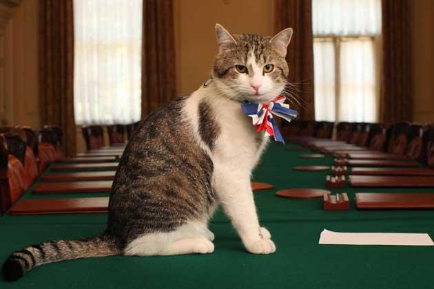 イギリスの首相官邸で雇用されている猫「ネズミ捕獲長」のラリー(Larry)