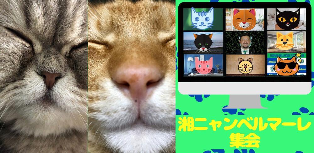 Zoomで猫について語りあう湘南ベルマーレのフットサルクラブのイベント「湘ニャンベルマーレ集会」