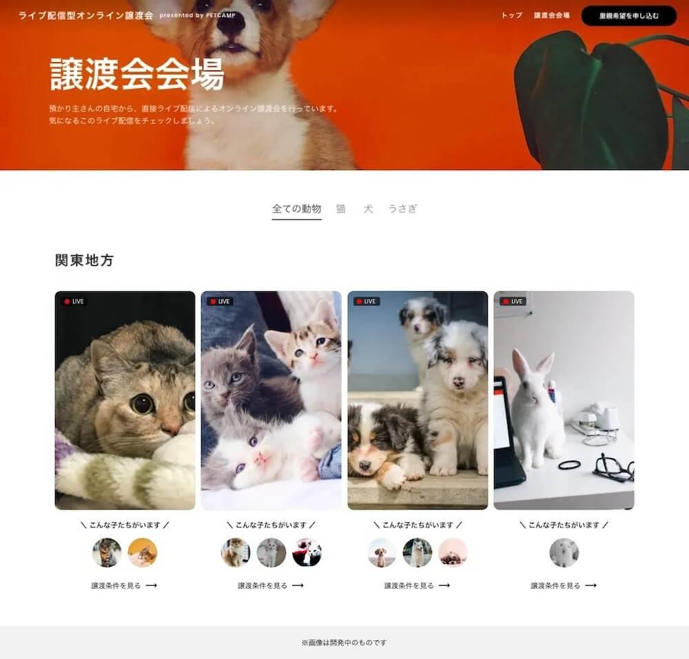保護猫&保護犬のライブ配信の画面イメージ by ペットキャンプのオンライン譲渡会