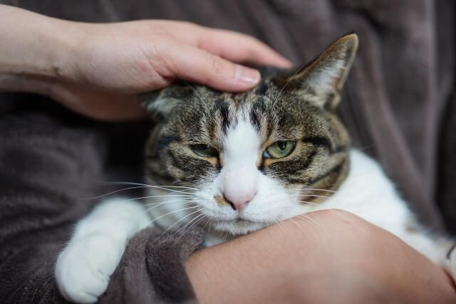 飼い主さんに抱きかかえられながら頭を撫でられる猫のイメージ写真