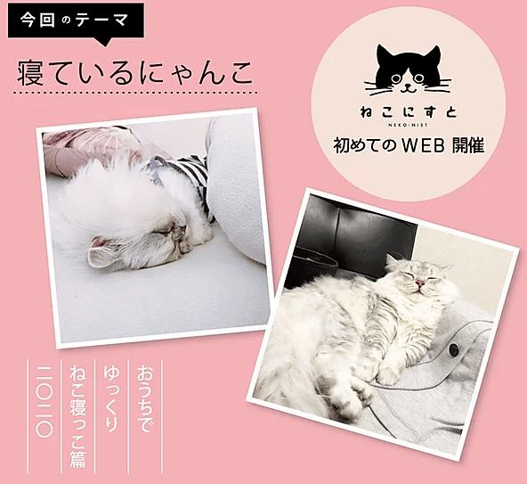 「WEBねこにすと〜ねこ寝っこ篇〜」の写真テーマ