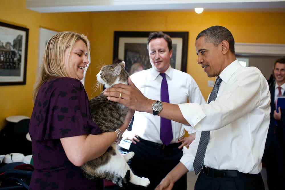 オバマ大統領と触れ合うイギリスの首相官邸猫ラリー(Larry)