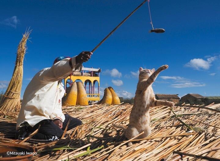 ペルーのティティカ湖で暮らす男性と猫の写真 by 岩合光昭写真集「スタンド・バイ・ニャー」
