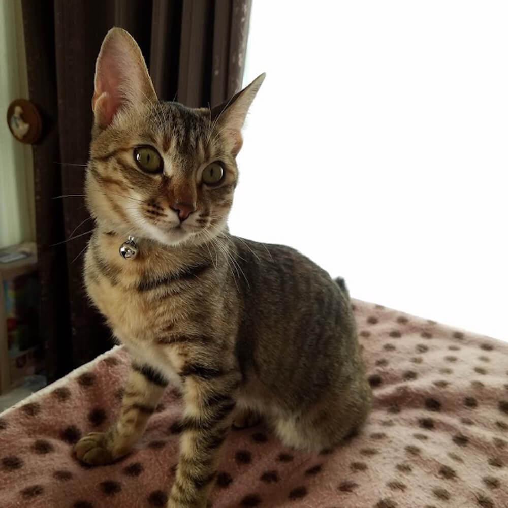 児童文学作家・村山早紀さんの愛猫