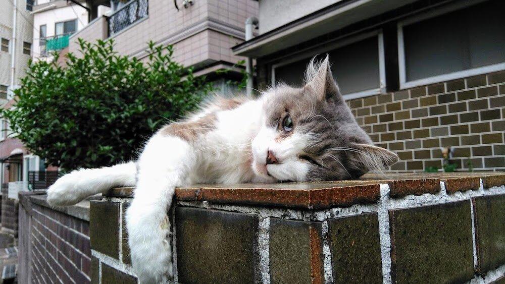 長崎の野良猫 by 書籍「心にいつも猫をかかえて」