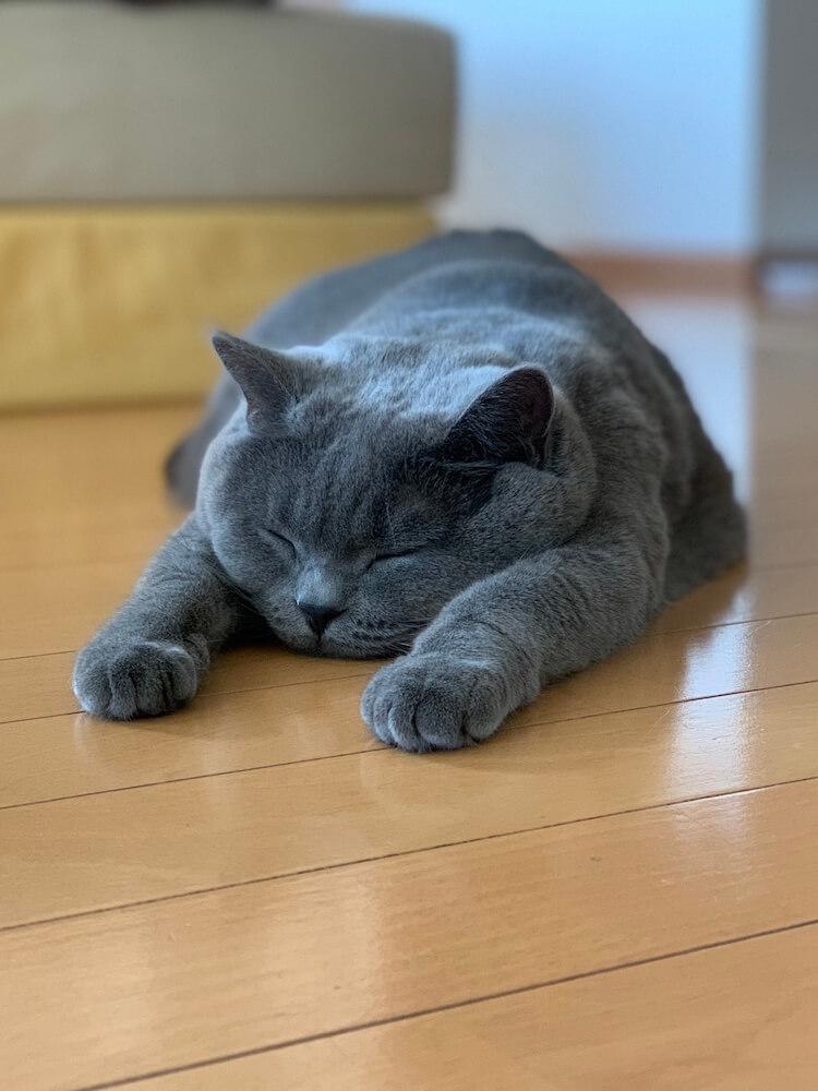 床に突っ伏して眠る猫 by WEBねこにすと〜ねこ寝っこ篇〜
