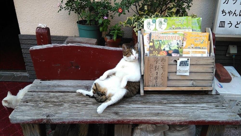 スコ座りをする長崎の野良猫 by 書籍「心にいつも猫をかかえて」
