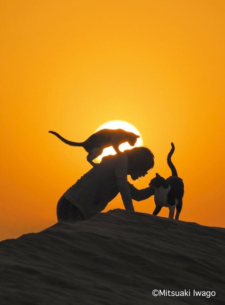 アラブ首長国連邦・ルブアルハリ砂漠で暮らす日本出身女性と猫の写真 by 岩合光昭写真集「スタンド・バイ・ニャー」