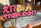 【レビュー動画】魚の形をした動くけりぐるみに驚くほど猫が食いつきました