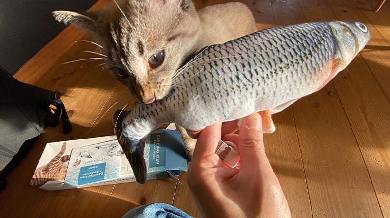 ダンシングフィッシュという動く魚の猫用おもちゃを咥える猫