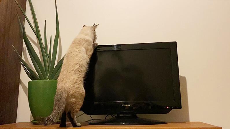 You Tubeで人気の猫「ラムネ」の私生活を切り取ったオフショット
