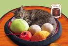 猫が寝るだけで和菓子のできあがり〜♪ 自宅が甘味処になる「あんみつにゃんこクッション」